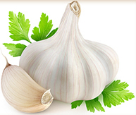 Garlic- a wonder plant